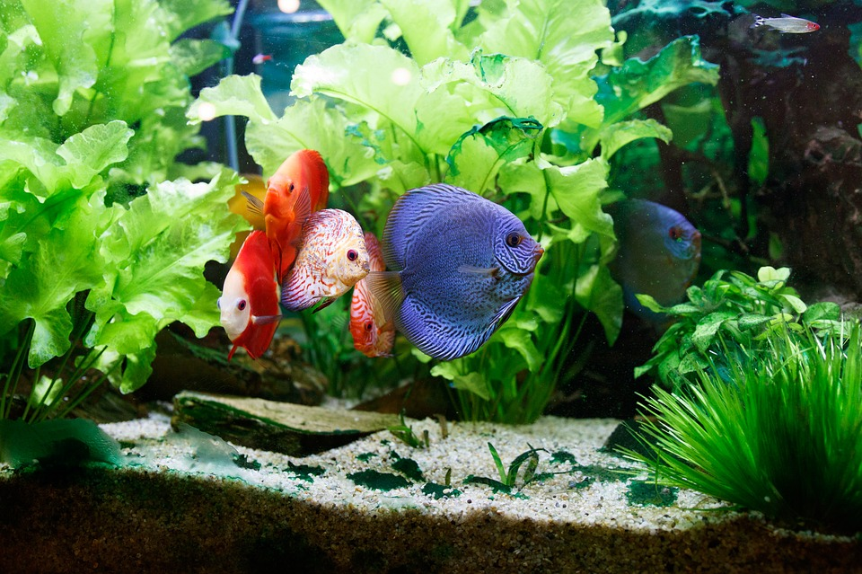 Don T Flounder How To Move A Fish Tank Or Aquarium
